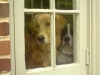 Murphy and Dipstick in the window