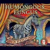 LUCKY DOUG FERGUS|Indie Rock/Humor Rock/Alt. Rock